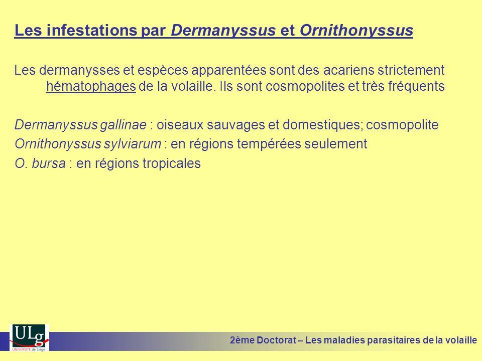 Les infestations par Dermanyssus et Ornithonyssus Les dermanysses et espèces apparentées sont des acariens strictement hématophages de la volaille. Il