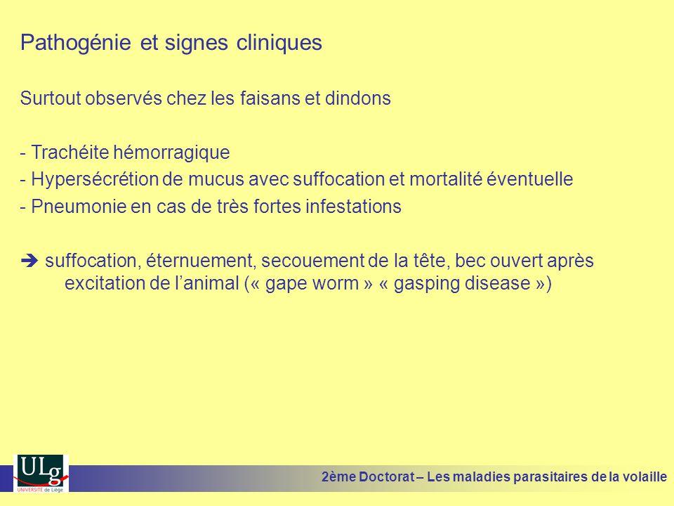 Pathogénie et signes cliniques Surtout observés chez les faisans et dindons - Trachéite hémorragique - Hypersécrétion de mucus avec suffocation et mor