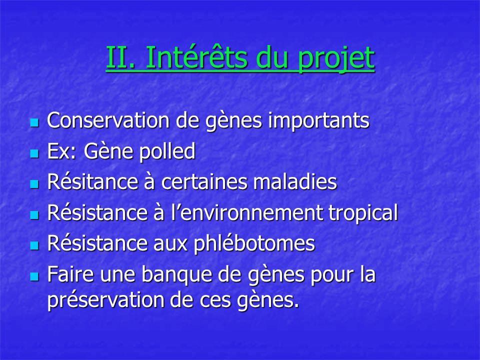 II. Intérêts du projet Conservation de gènes importants Conservation de gènes importants Ex: Gène polled Ex: Gène polled Résitance à certaines maladie