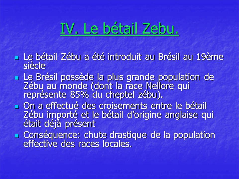 IV.Le bétail Zebu.