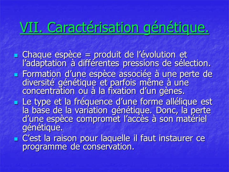 VII.Caractérisation génétique.