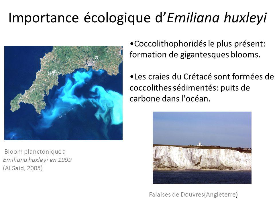 Importance écologique d'Emiliana huxleyi Bloom planctonique à Emiliana huxleyi en 1999 (Al Said, 2005) Coccolithophoridés le plus présent: formation de gigantesques blooms.