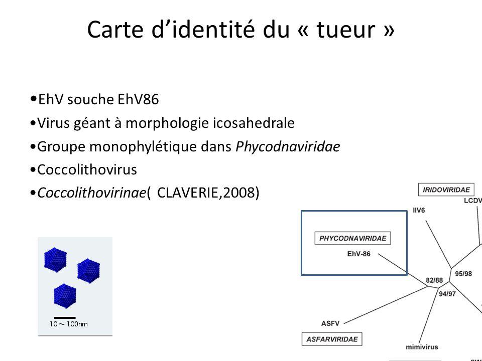 Carte d'identité du « tueur » EhV souche EhV86 Virus géant à morphologie icosahedrale Groupe monophylétique dans Phycodnaviridae Coccolithovirus Coccolithovirinae( CLAVERIE,2008)