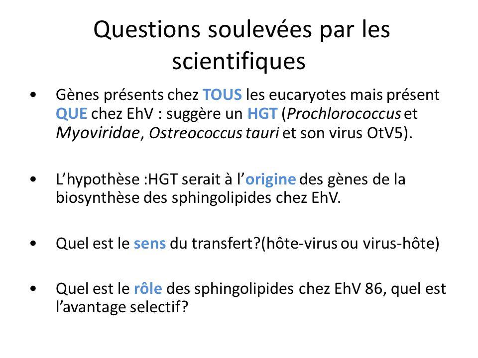 Questions soulevées par les scientifiques Gènes présents chez TOUS les eucaryotes mais présent QUE chez EhV : suggère un HGT (Prochlorococcus et Myoviridae, Ostreococcus tauri et son virus OtV5).