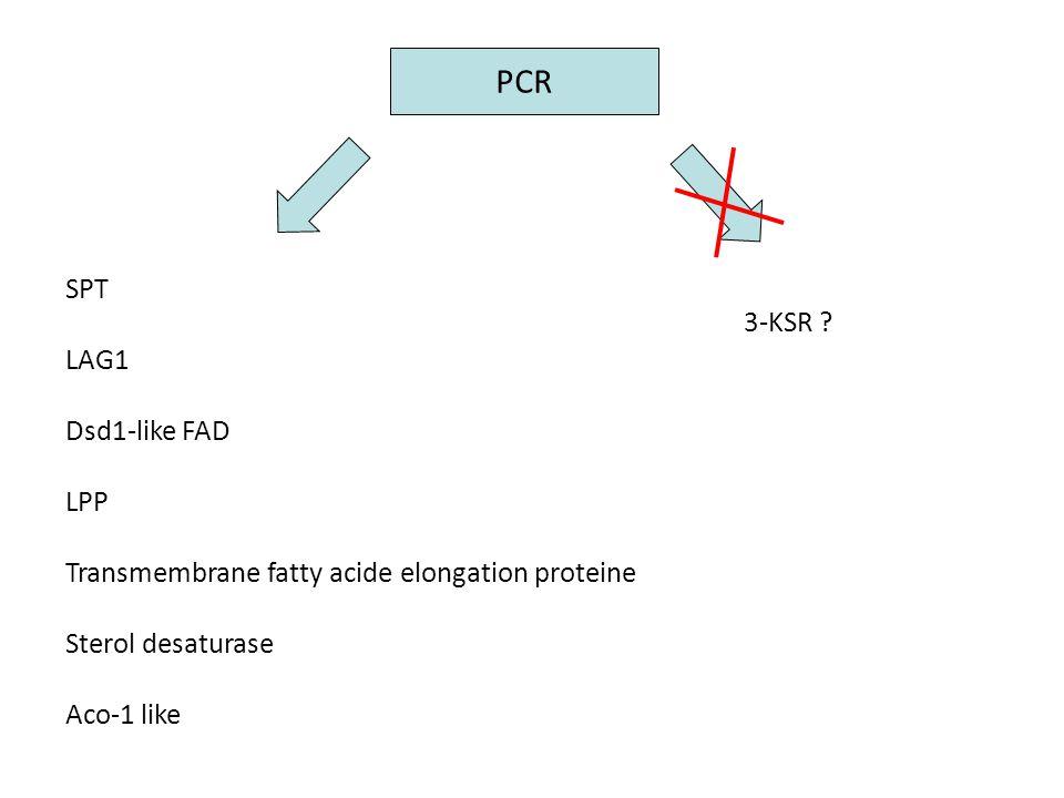 PCR SPT LAG1 Dsd1-like FAD LPP Transmembrane fatty acide elongation proteine Sterol desaturase Aco-1 like 3-KSR ?