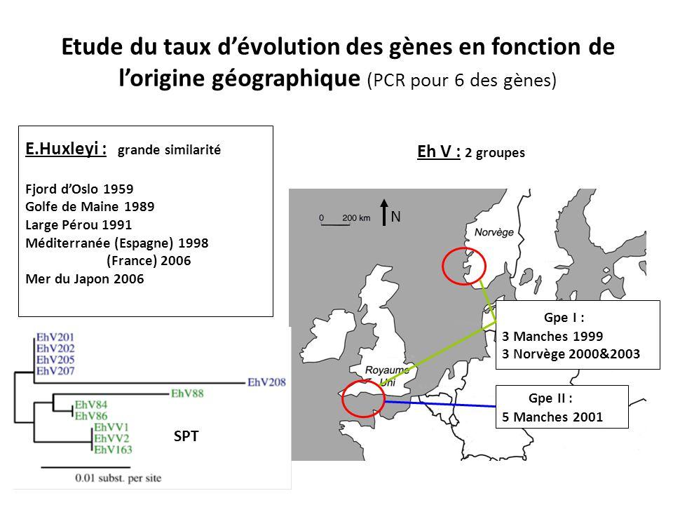 Etude du taux d'évolution des gènes en fonction de l'origine géographique (PCR pour 6 des gènes) Eh V : 2 groupes Gpe I : 3 Manches 1999 3 Norvège 2000&2003 Gpe II : 5 Manches 2001 E.Huxleyi : grande similarité Fjord d'Oslo 1959 Golfe de Maine 1989 Large Pérou 1991 Méditerranée (Espagne) 1998 (France) 2006 Mer du Japon 2006 SPT N