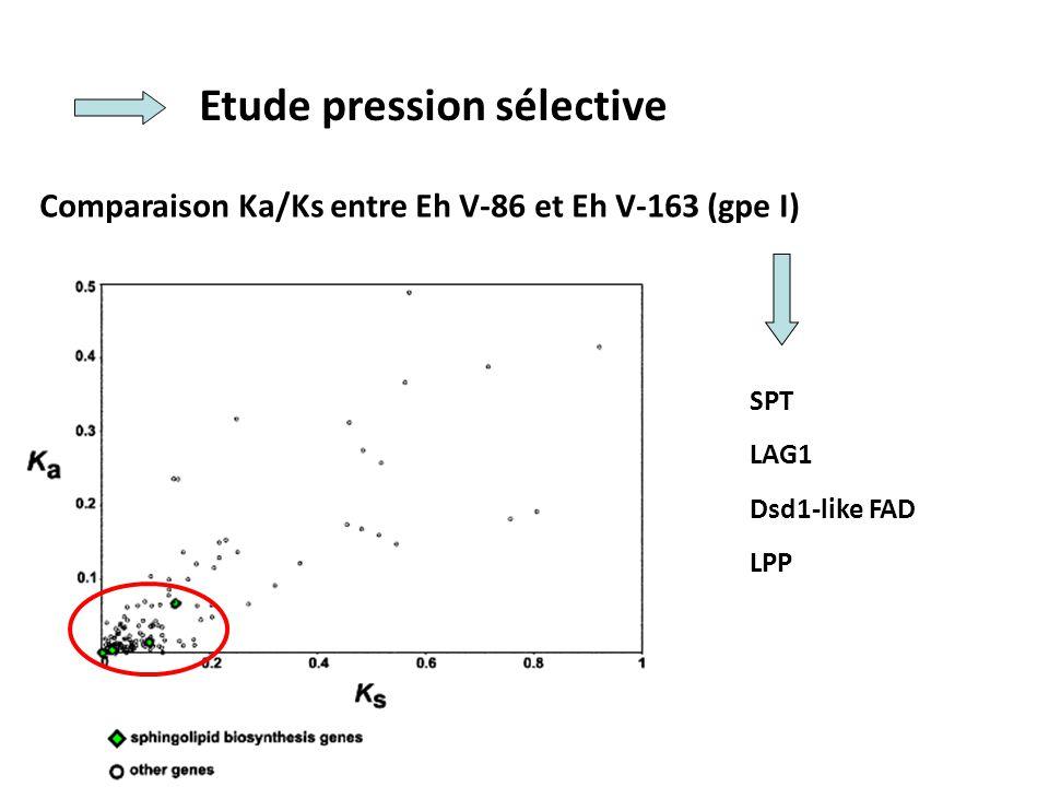 Etude pression sélective Comparaison Ka/Ks entre Eh V-86 et Eh V-163 (gpe I) SPT LAG1 Dsd1-like FAD LPP