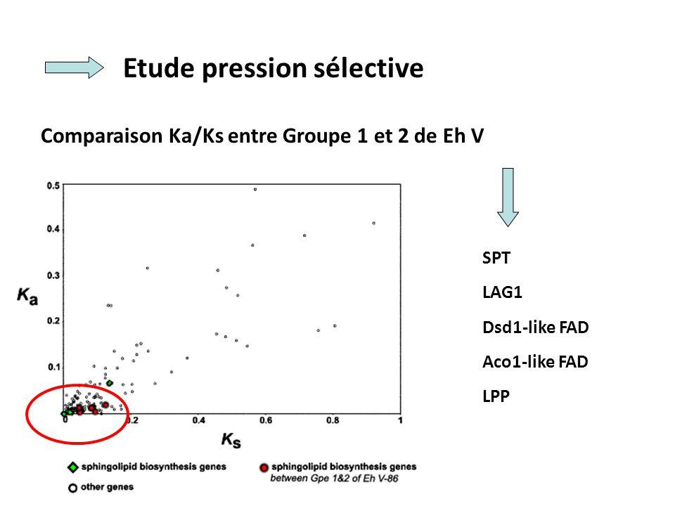 Etude pression sélective Comparaison Ka/Ks entre Groupe 1 et 2 de Eh V SPT LAG1 Dsd1-like FAD Aco1-like FAD LPP
