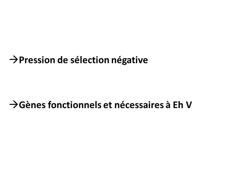  Pression de sélection négative  Gènes fonctionnels et nécessaires à Eh V