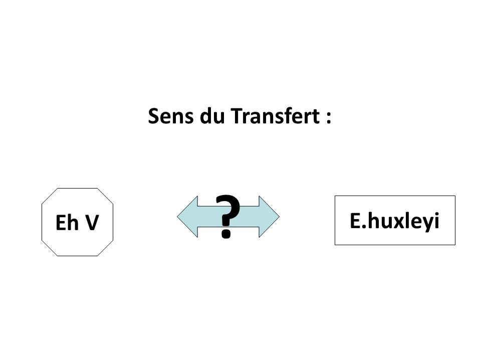 Sens du Transfert : ? Eh V E.huxleyi