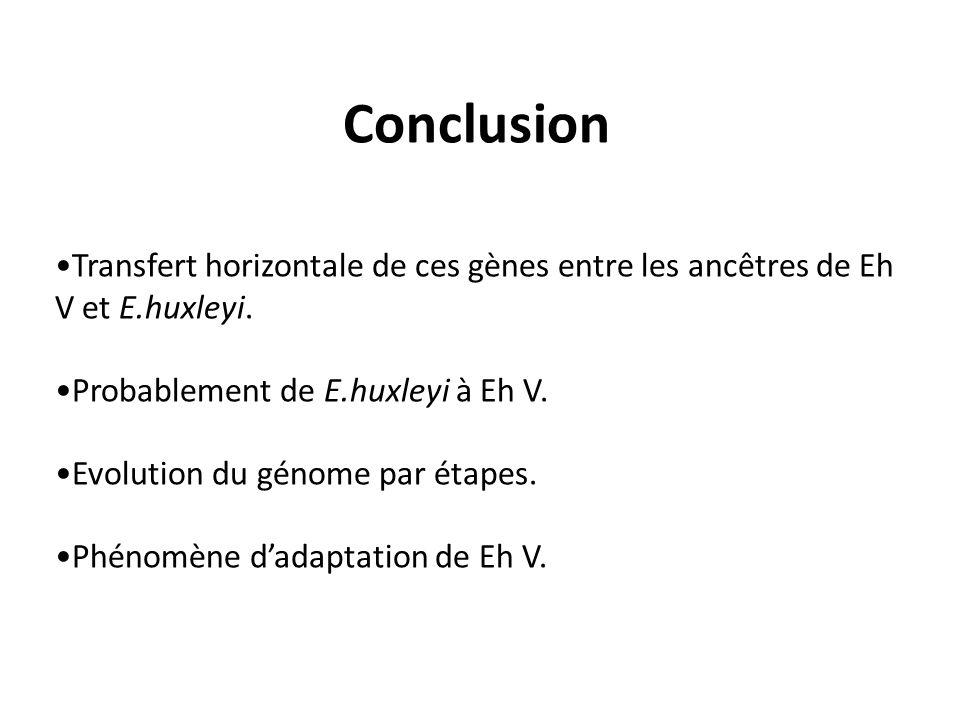 Conclusion Transfert horizontale de ces gènes entre les ancêtres de Eh V et E.huxleyi. Probablement de E.huxleyi à Eh V. Evolution du génome par étape