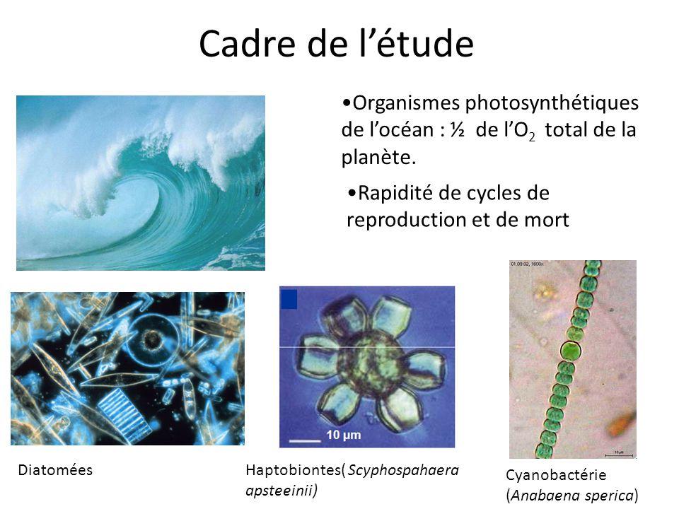 Cadre de l'étude Organismes photosynthétiques de l'océan : ½ de l'O 2 total de la planète. Cyanobactérie (Anabaena sperica) Diatomées Rapidité de cycl