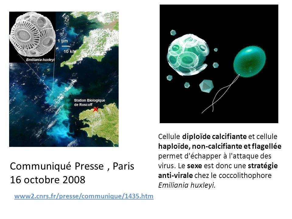 www2.cnrs.fr/presse/communique/1435.htm Communiqué Presse, Paris 16 octobre 2008 Cellule diploïde calcifiante et cellule haploïde, non-calcifiante et