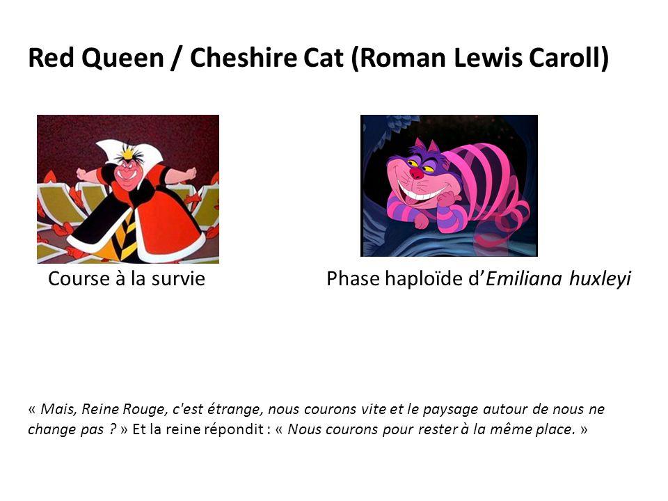 Red Queen / Cheshire Cat (Roman Lewis Caroll) Course à la survie Phase haploïde d'Emiliana huxleyi « Mais, Reine Rouge, c est étrange, nous courons vite et le paysage autour de nous ne change pas .