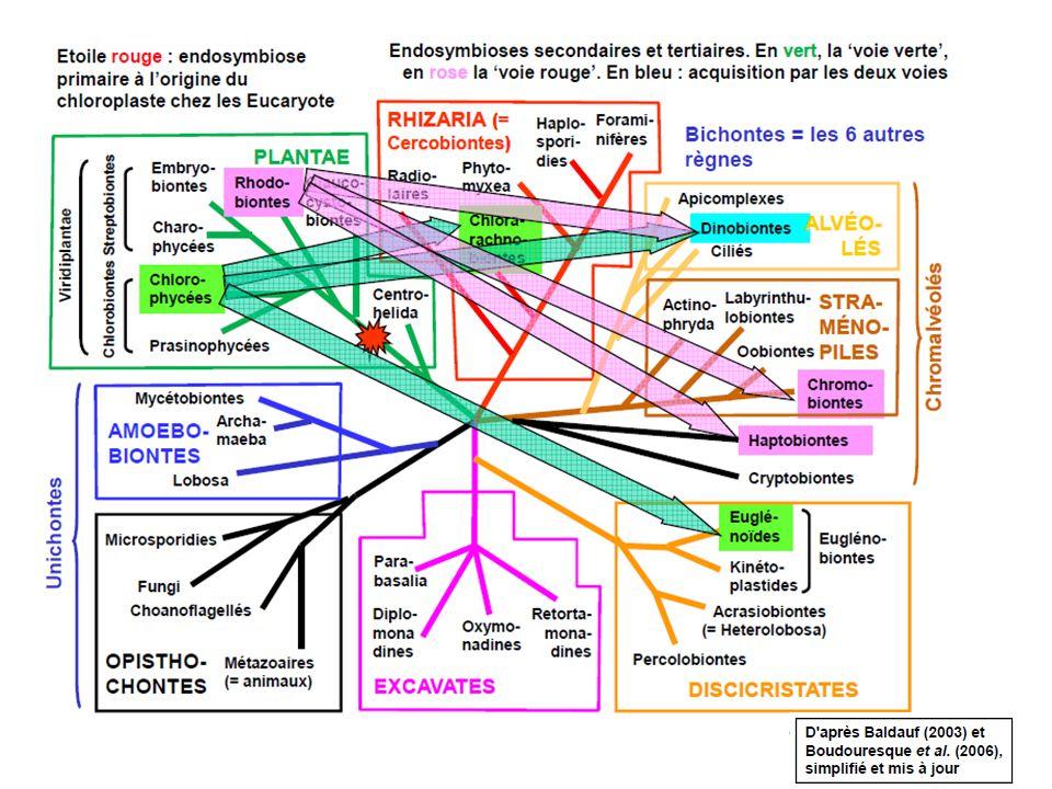 L'organisme eucaryote concerné: Emiliana huxleyi Emiliana huxleyi Eucaryotes Chromalvéolés Haptobiontes Nommée algue ou microalgue Endosymbiose secondaire « voie rouge » ScanningElectron Microscopy picture of Emiliania huxleyi