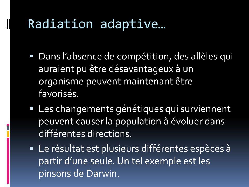Radiation adaptive…  Dans l'absence de compétition, des allèles qui auraient pu être désavantageux à un organisme peuvent maintenant être favorisés.