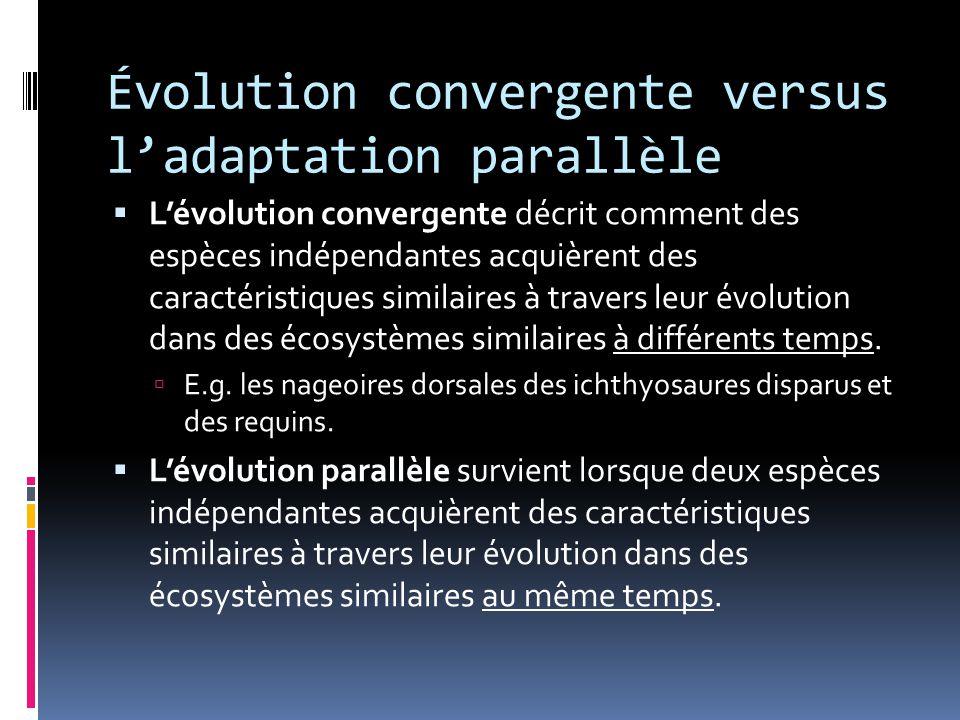 Évolution convergente versus l'adaptation parallèle  L'évolution convergente décrit comment des espèces indépendantes acquièrent des caractéristiques similaires à travers leur évolution dans des écosystèmes similaires à différents temps.