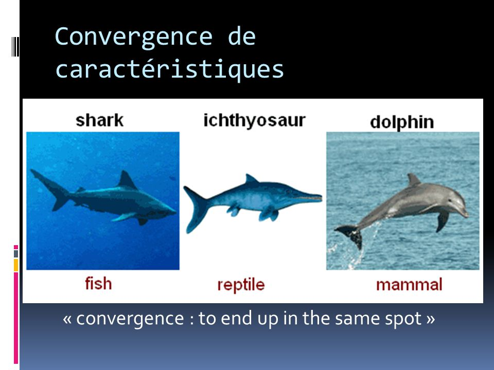 Convergence de caractéristiques « convergence : to end up in the same spot »