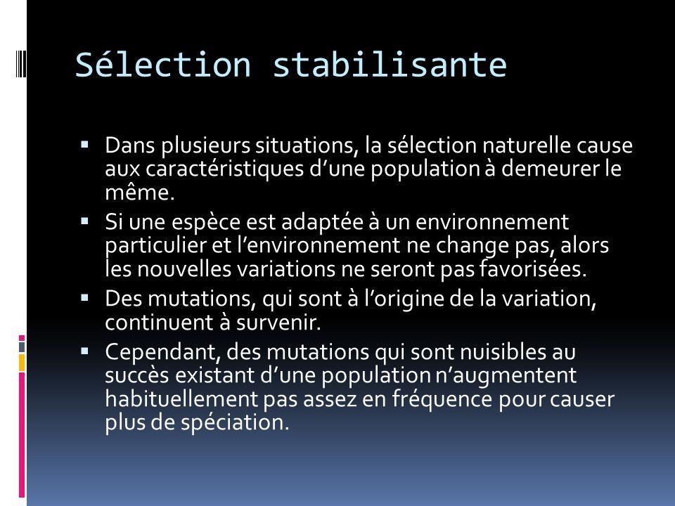 Sélection stabilisante  Dans plusieurs situations, la sélection naturelle cause aux caractéristiques d'une population à demeurer le même.