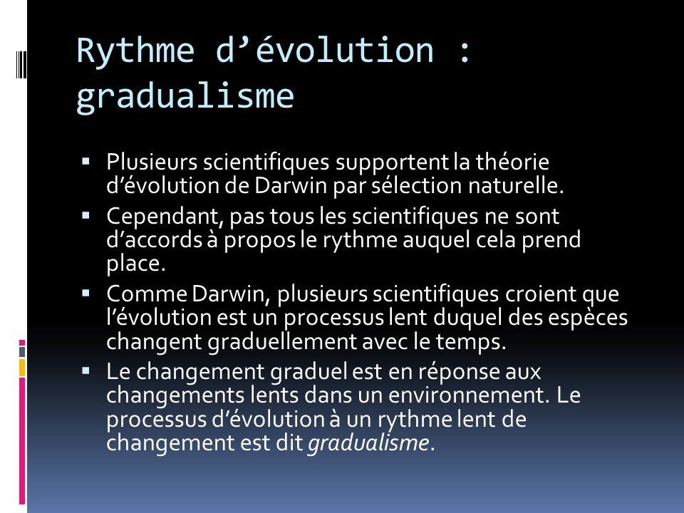 Rythme d'évolution : gradualisme  Plusieurs scientifiques supportent la théorie d'évolution de Darwin par sélection naturelle.