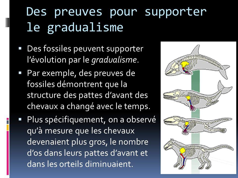 Des preuves pour supporter le gradualisme  Des fossiles peuvent supporter l'évolution par le gradualisme.