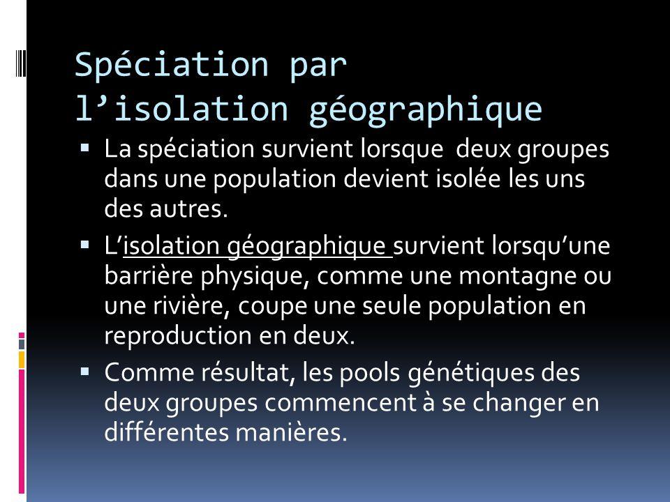 Spéciation par l'isolation géographique  La spéciation survient lorsque deux groupes dans une population devient isolée les uns des autres.