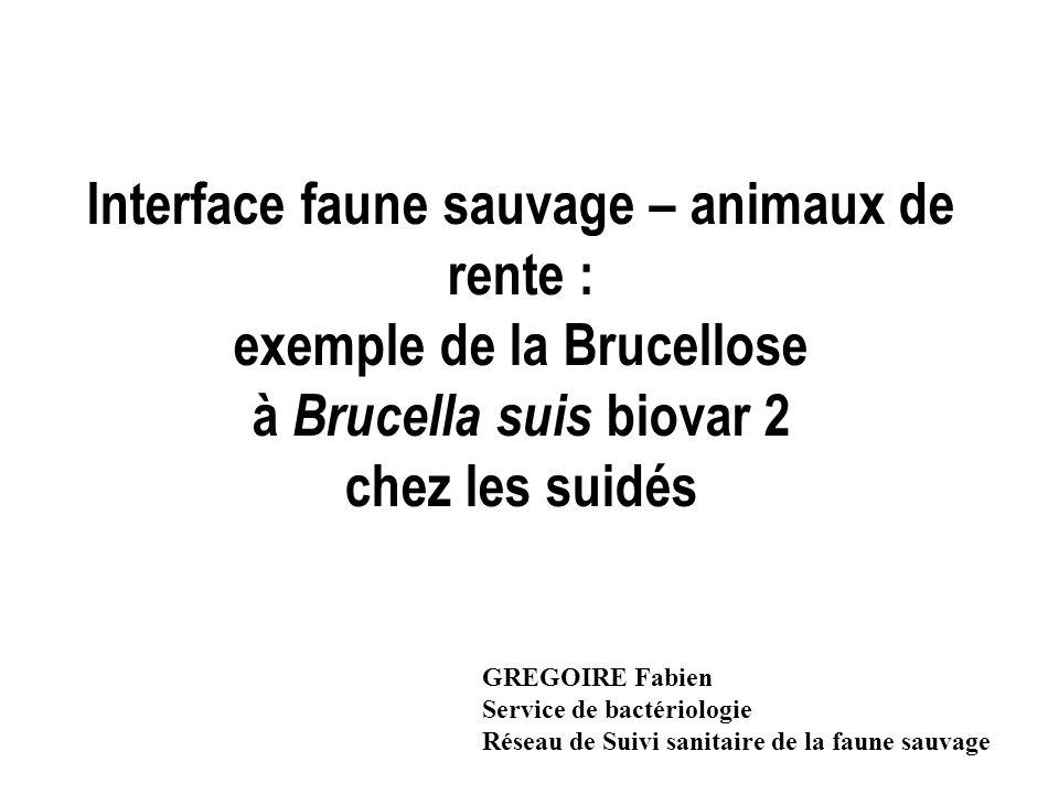 Interface faune sauvage – animaux de rente : exemple de la Brucellose à Brucella suis biovar 2 chez les suidés GREGOIRE Fabien Service de bactériologi
