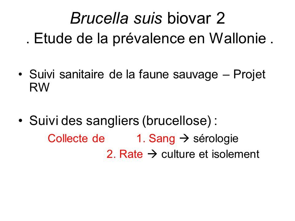 Suivi sanitaire de la faune sauvage – Projet RW Suivi des sangliers (brucellose) : Collecte de 1. Sang  sérologie 2. Rate  culture et isolement Bruc
