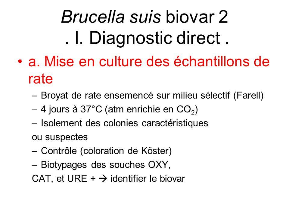 a. Mise en culture des échantillons de rate –Broyat de rate ensemencé sur milieu sélectif (Farell) –4 jours à 37°C (atm enrichie en CO 2 ) –Isolement