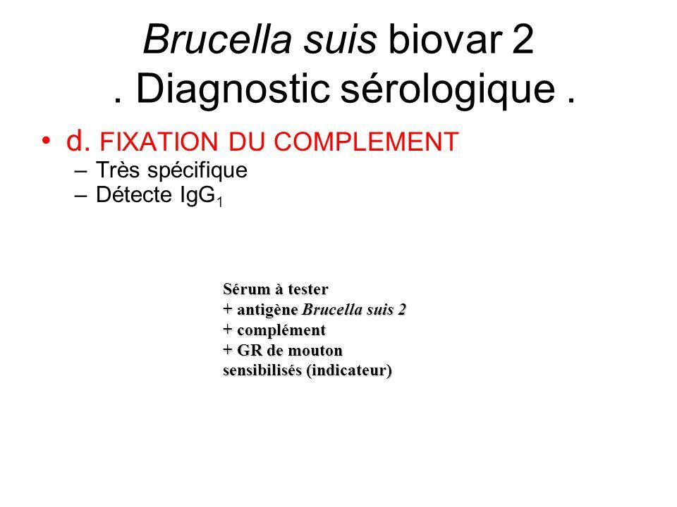 d. FIXATION DU COMPLEMENT –Très spécifique –Détecte IgG 1 Brucella suis biovar 2. Diagnostic sérologique. Sérum à tester + antigène Brucella suis 2 +