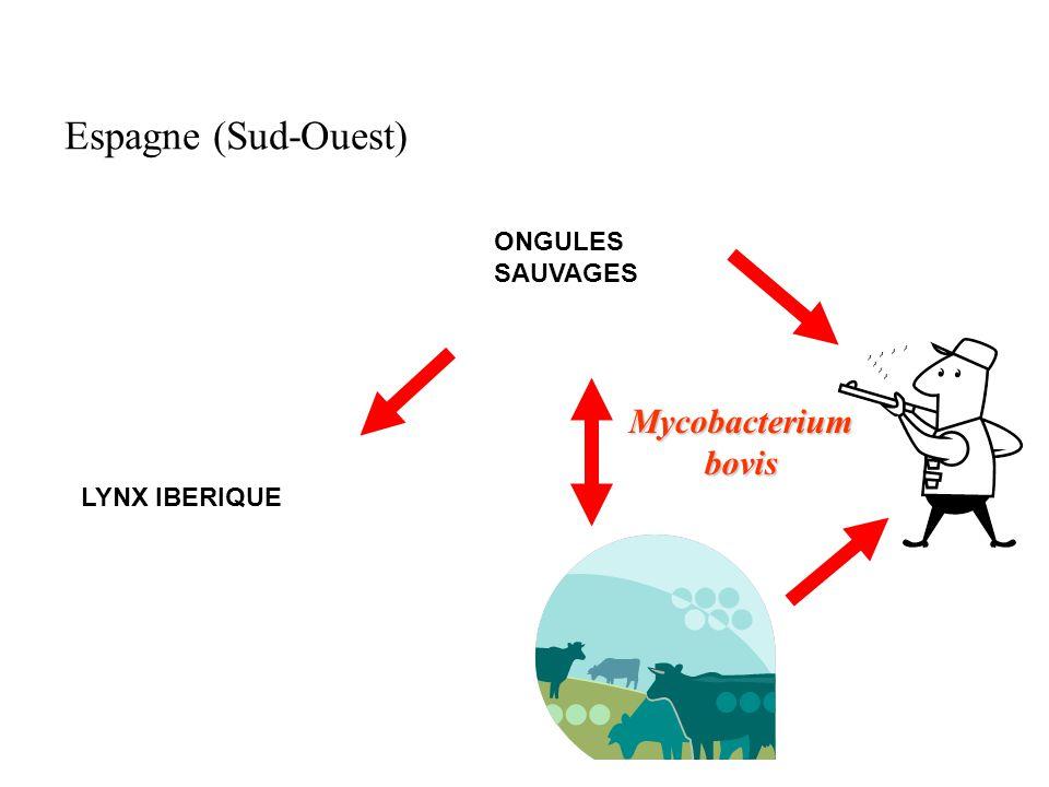 Mycobacterium bovis Espagne (Sud-Ouest) LYNX IBERIQUE ONGULES SAUVAGES