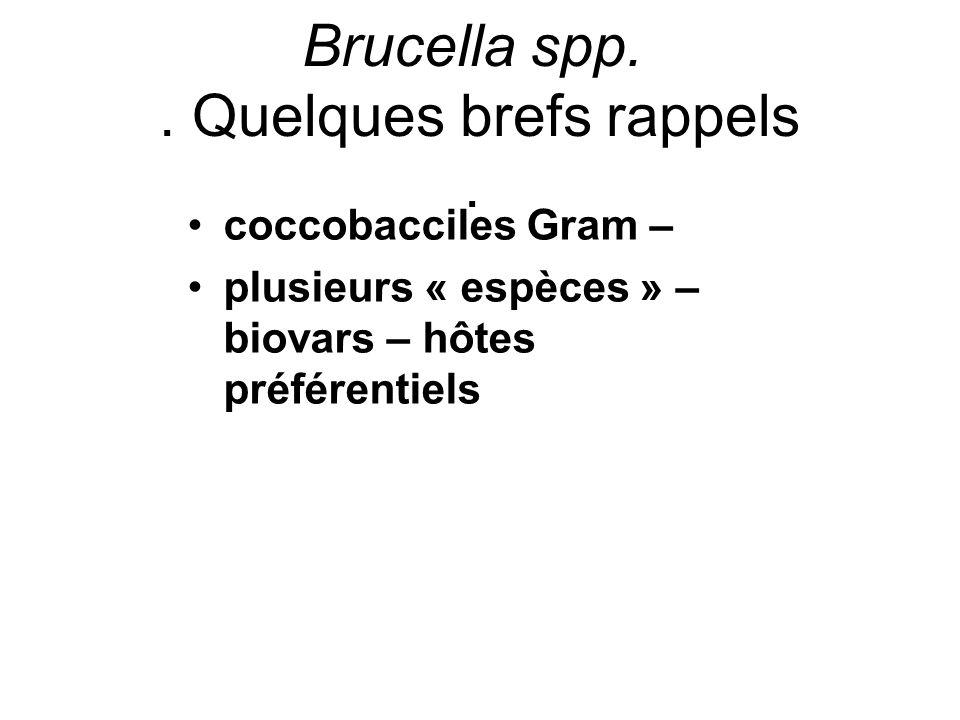 c.AGGLUTINATION RAPIDE SUR LAME (ou test Rose Bengale) Brucella suis biovar 2.