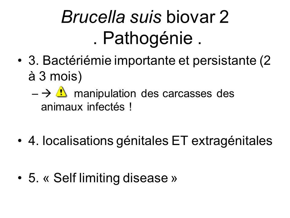COMBINAISON DES 5 TESTS = efficacité maximale Aucun test sérologique ne peut différencier réactions envers Brucella et Y.