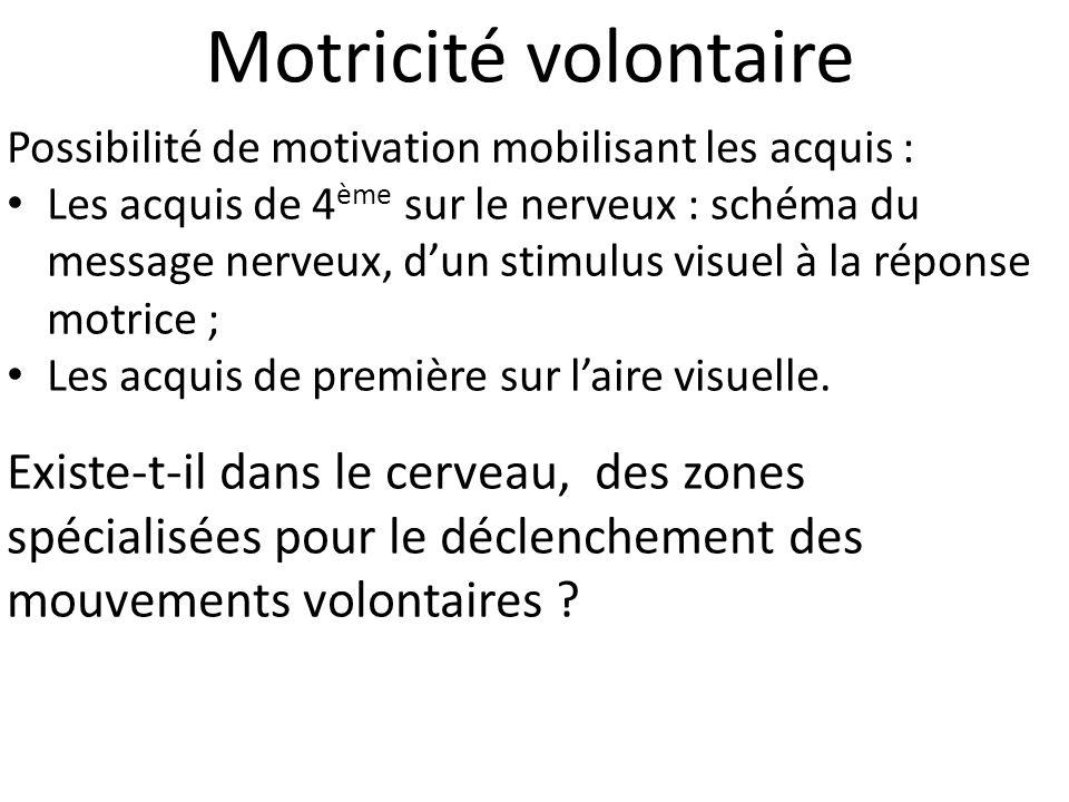 Motricité volontaire Possibilité de motivation mobilisant les acquis : Les acquis de 4 ème sur le nerveux : schéma du message nerveux, d'un stimulus visuel à la réponse motrice ; Les acquis de première sur l'aire visuelle.