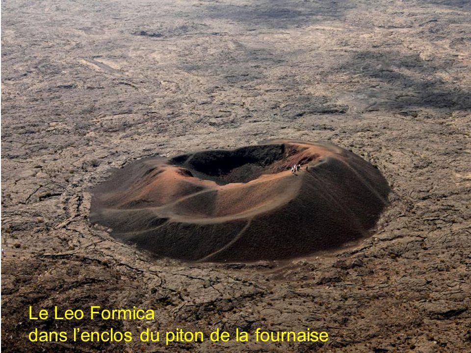 Le Leo Formica dans l'enclos du piton de la fournaise