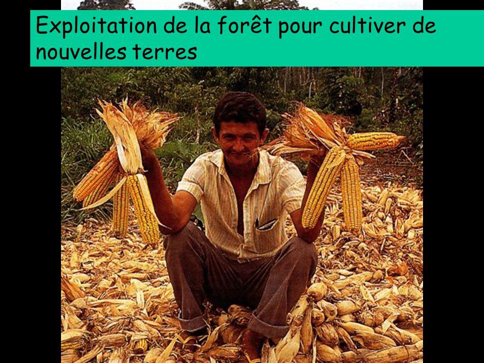 Exploitation de la forêt pour cultiver de nouvelles terres