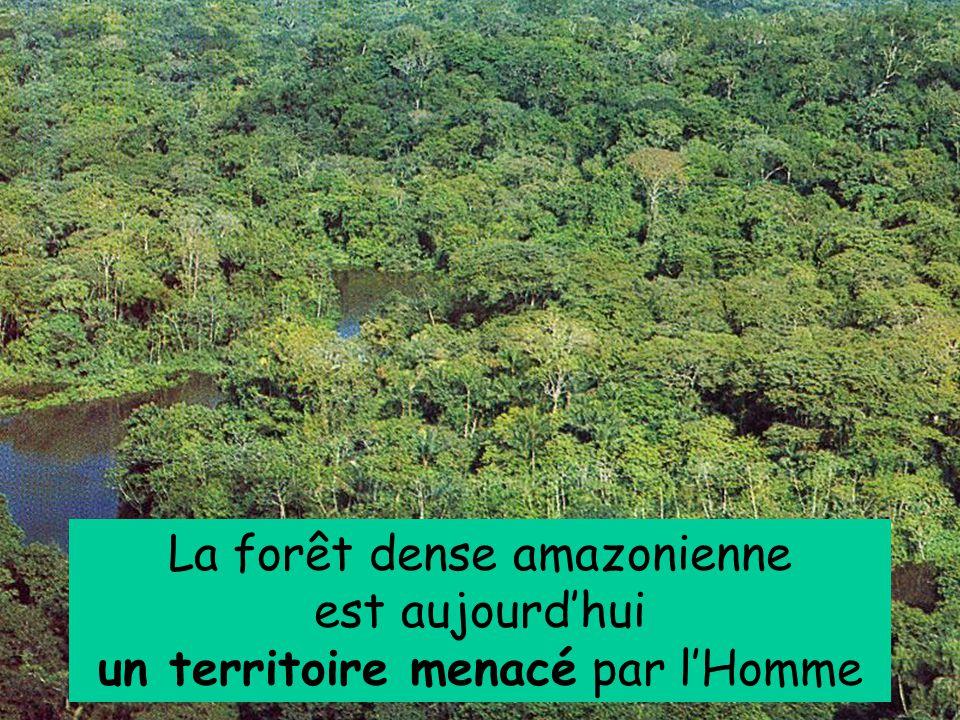 La forêt dense amazonienne est aujourd'hui un territoire menacé par l'Homme