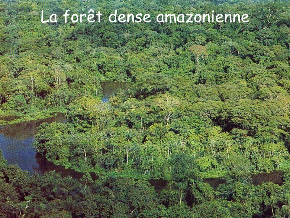 La forêt dense amazonienne