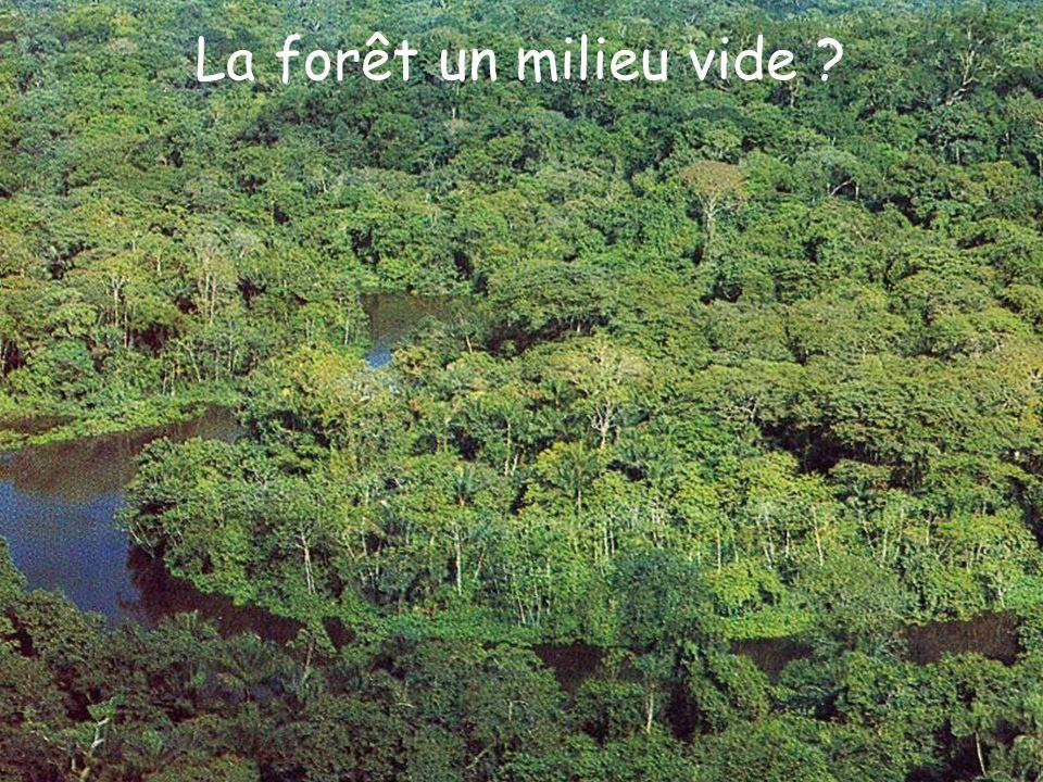 La forêt un milieu vide ?