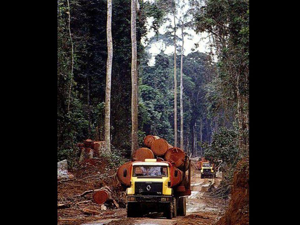 Exploitation de la forêt pour certains bois précieux comme le teck, l'acajou…
