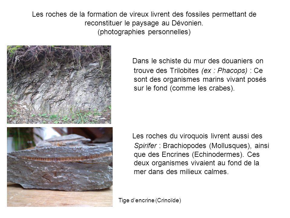 La grande carrière de Vireux (photographies personnelles) Dans les schistes de la formation de Vireux se sont fossilisés des ripple- marks ou rides de courant qui témoignent d'une sédimentation de type « plage ».