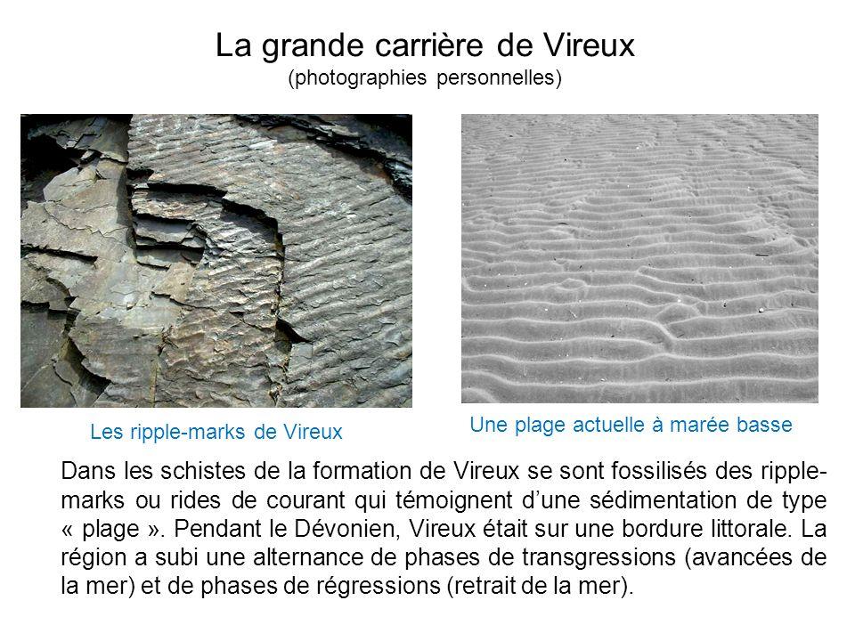 La grande carrière de Vireux (photographies personnelles) Dans les schistes de la formation de Vireux se sont fossilisés des ripple- marks ou rides de