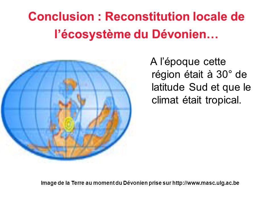 Conclusion : Reconstitution locale de l'écosystème du Dévonien… A l'époque cette région était à 30° de latitude Sud et que le climat était tropical. I