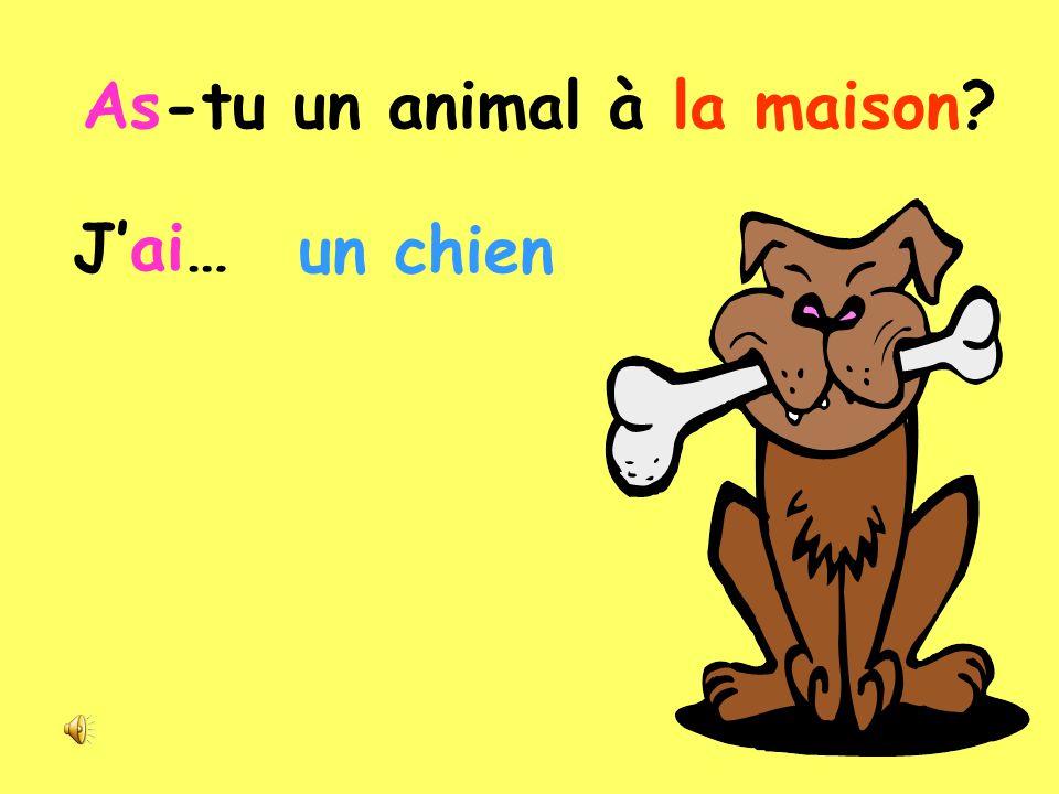 _ _ -_ _/_ _ /_ _ _ _ _ _/_ /_ _/ _ _ _ _ _ _? As-tu un animal à la maison? la animal As- maison un tu à? J'ai …..