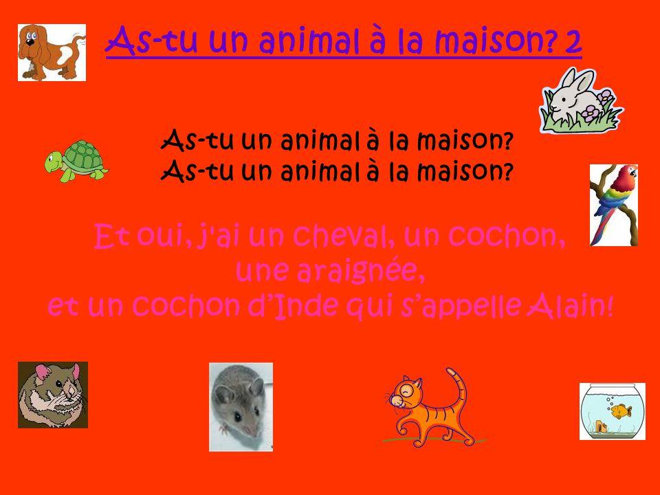 Et oui, j'ai un chien, une tortue, un lapin, et un chat qui s'appelle Miriam! As-tu un animal à la maison? Oui, j'ai un oiseau, un poisson, un hamster