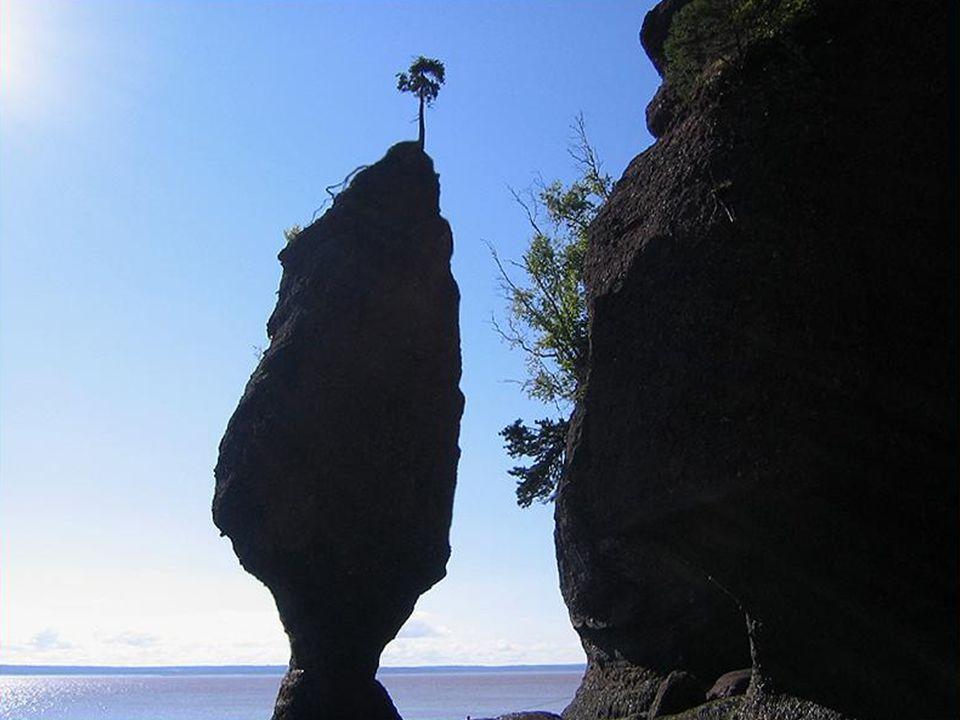 Ici, dans la baie de Fundy, on peut observer les eaux monter de plus de trois mètres à l'heure.