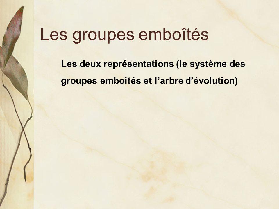 Les groupes emboîtés Les deux représentations (le système des groupes emboités et l'arbre d'évolution)