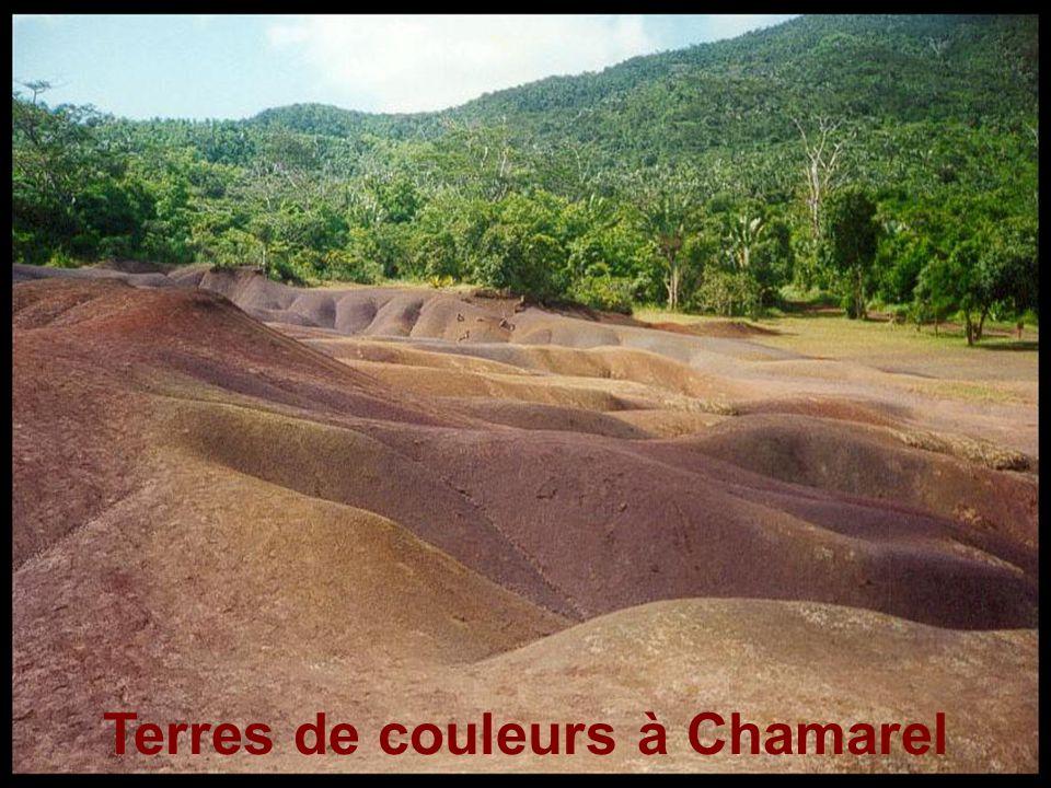 Terres de couleurs à Chamarel