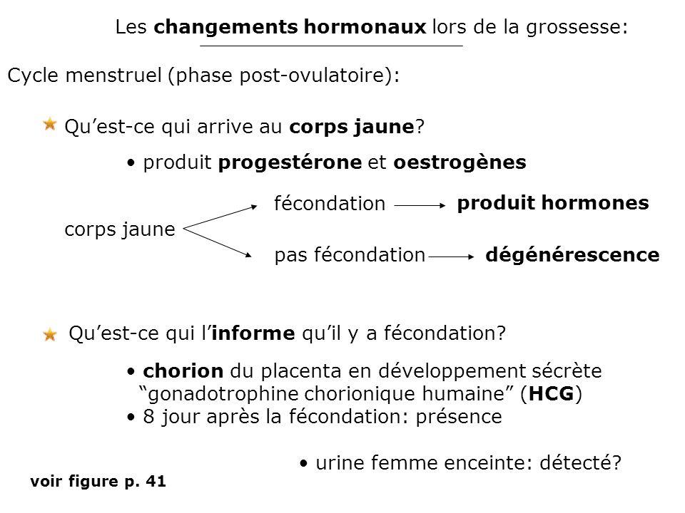 Les changements hormonaux lors de la grossesse: Cycle menstruel (phase post-ovulatoire): Qu'est-ce qui l'informe qu'il y a fécondation? chorion du pla