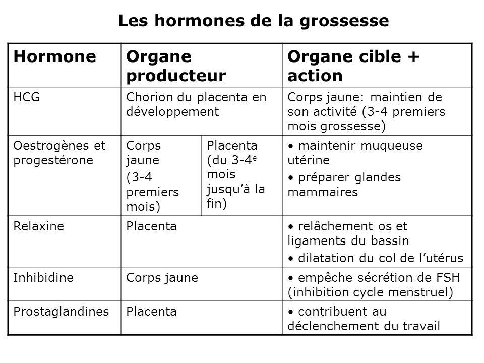 HormoneOrgane producteur Organe cible + action HCGChorion du placenta en développement Corps jaune: maintien de son activité (3-4 premiers mois grosse